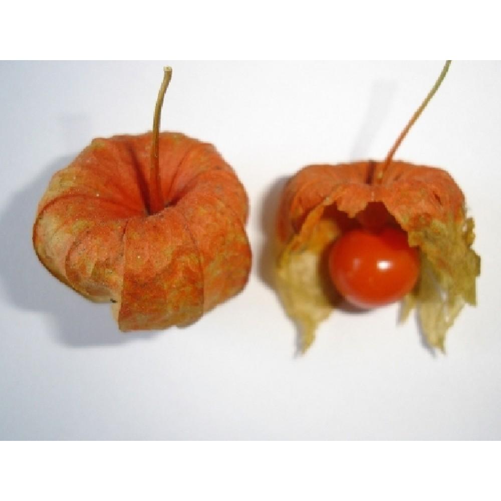 мехунка плод 5гр.